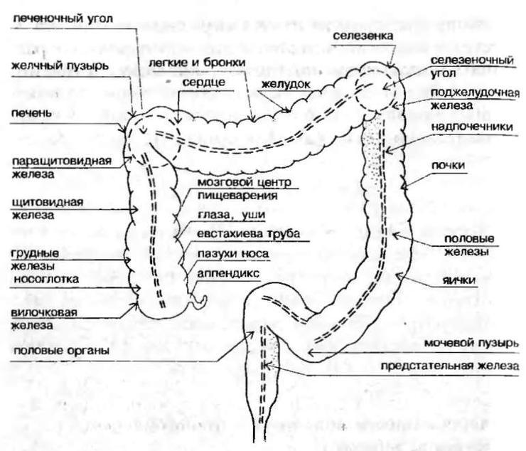 организма человека.