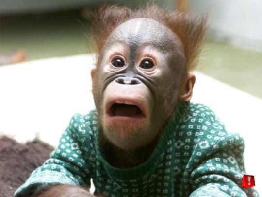 Спид секс с обезьяной
