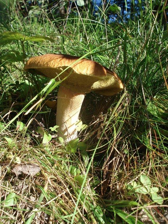 К чему снятся свежие грибы
