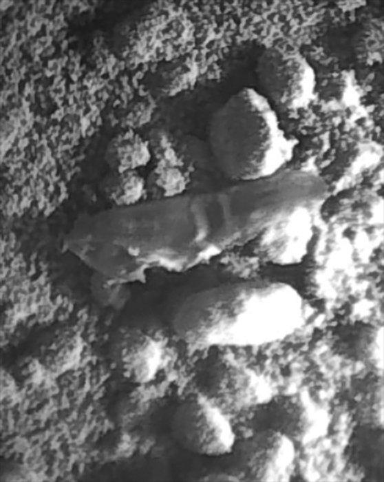 Лечения ногтя ноги от елены малышевой