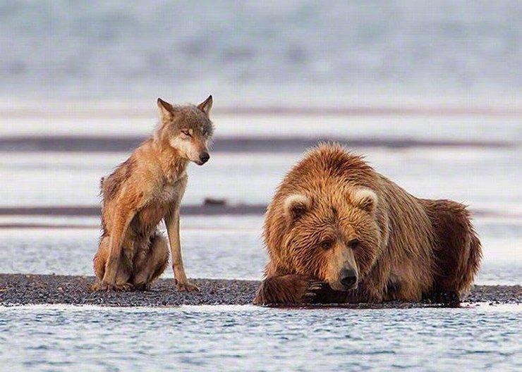 про всем знакомым зверей
