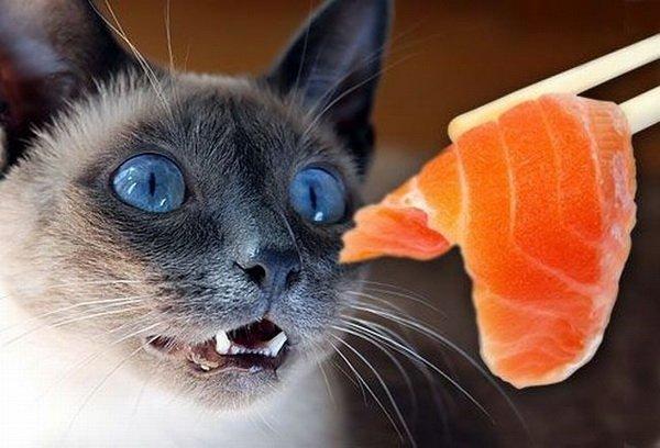 Понимают ли коты человека