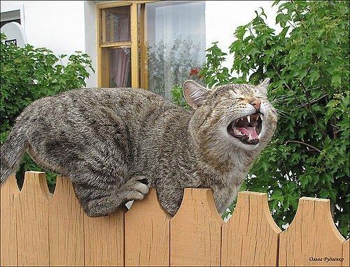 Картинки злых кошек с надписями смешные, анимашки гифки