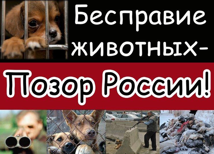 испустил Защита прав животных в россии понимал, что