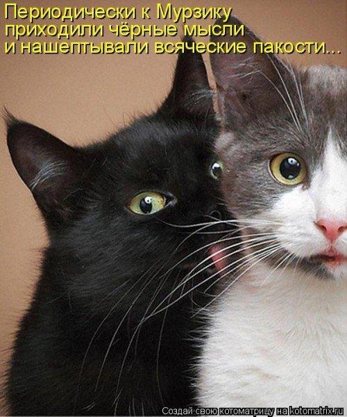 Кошка 9 открывает глаза в последнем