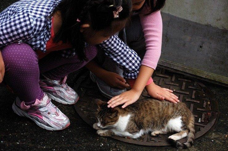 На экскурсию в деревню кошек