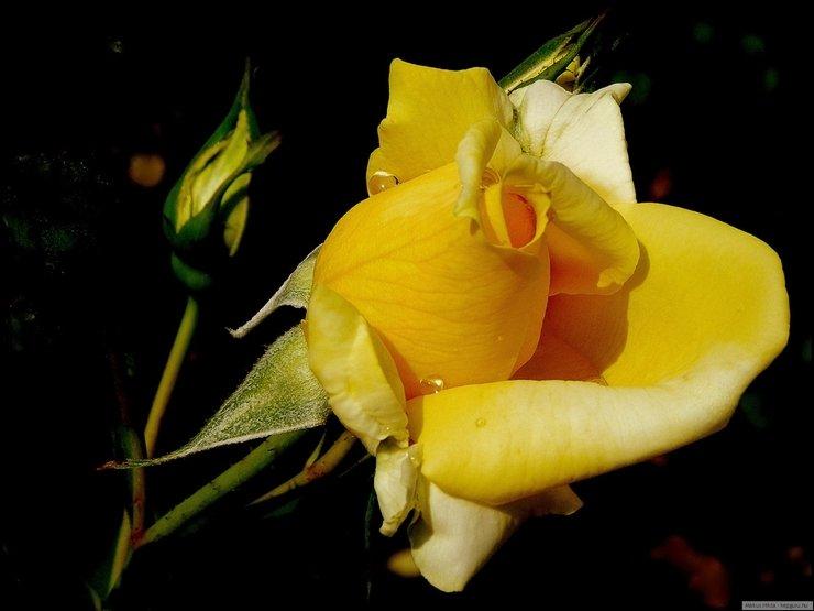 celebrity photo цветы № 123783