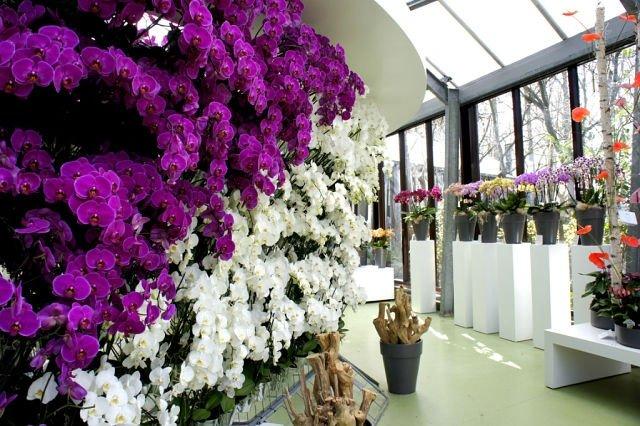 Орхідеї фото в природі фото 222-762