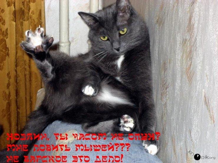 Картинки кот трахает мышь фото 116-145