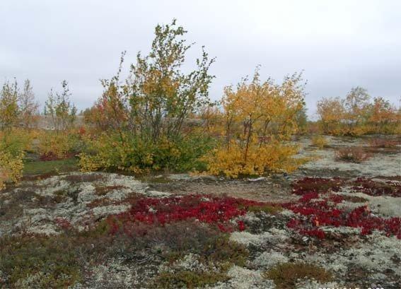 Картинки с природой севера