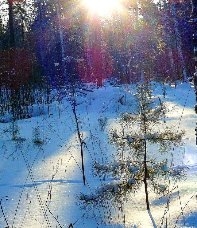 利亚的冬天》 作者:纳塔
