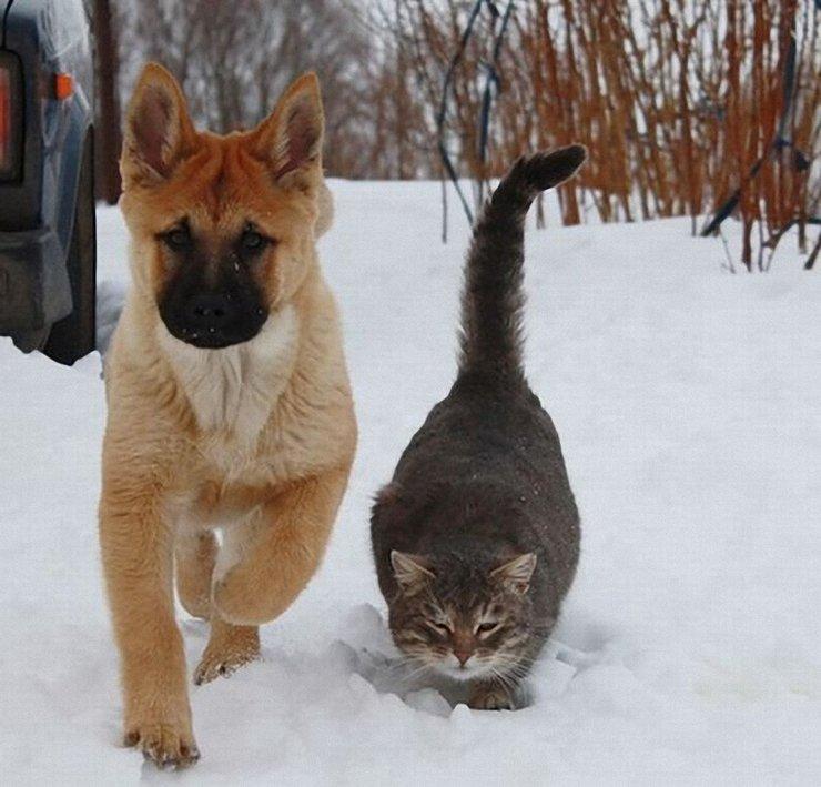 куда уходят больные коты