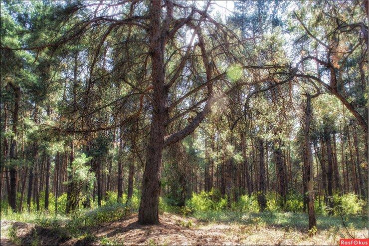 фронтовой лес фото