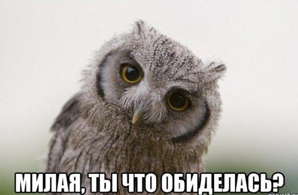 Ты что обиделась картинка совы