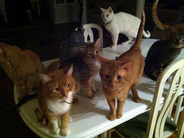 Сколько у антонова кошек фото