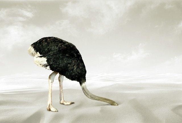 Смешные картинки страус в песке