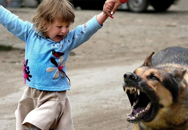 была Собака покусала другую собаку ответственность даже