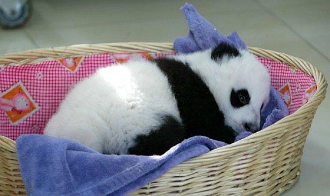 FurReal Friends Pom Pom My Baby Panda Pet  amazoncom