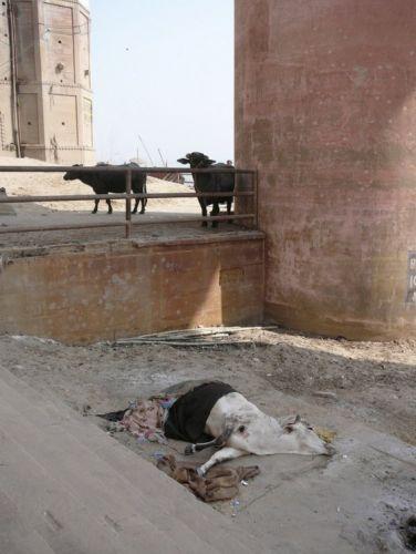 шокирующая индия фото