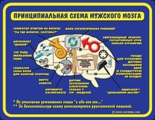 Блок-схема мозга мужчины