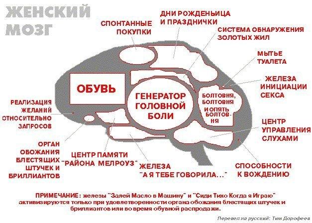 Блок-схема мозга женщины
